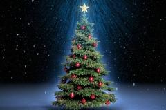 Weihnachtsbaum im Scheinwerferlicht
